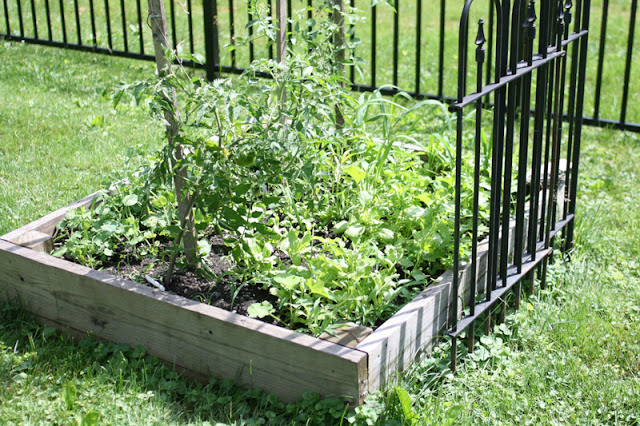 Growing a raised bed garden | www.1dogwoof.com
