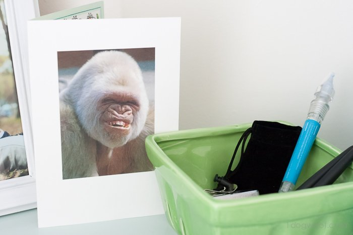 silly gorilla smile - Love it! | www.1dogwoof.com