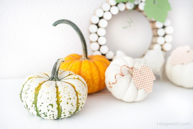 Love all those pumpkins! www.1dogwoof.com