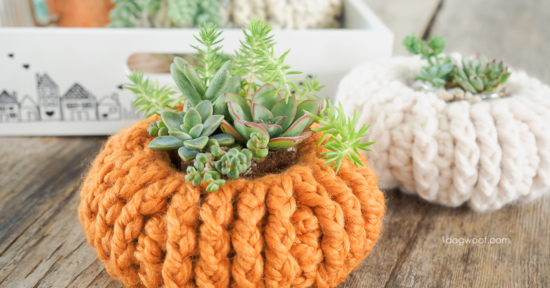Succulents pumpkin planter
