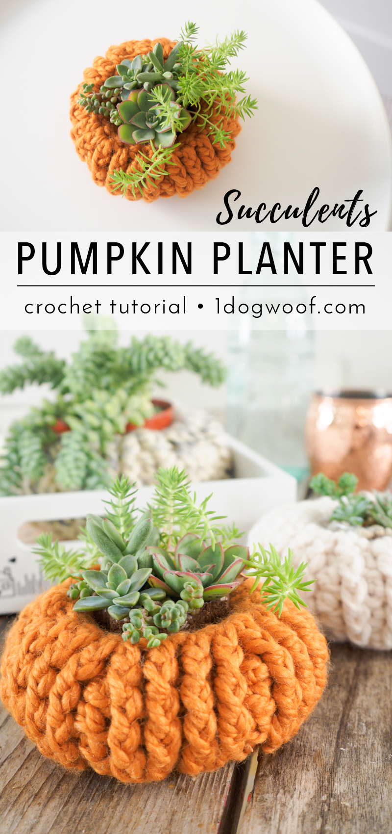 Simple crochet succulents pumpkin planters. Free pattern at 1dogwoof.com